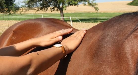NHMF – Nordiska Hästmassörers Förbund